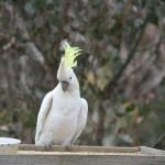 Random image: Birdtable03